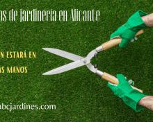 Cómo encontrar un servicio de jardinería en la zona de Alicante
